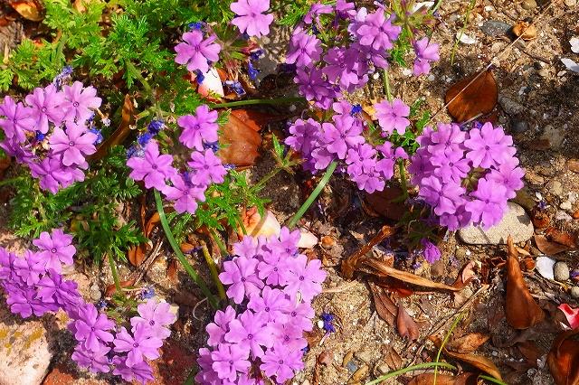 110505-flower014.jpg