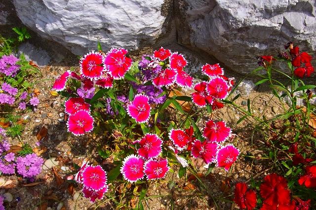 110505-flower012.jpg