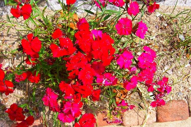 110505-flower013.jpg