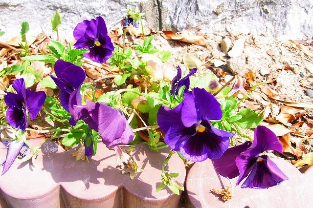 110505-flower019.jpg