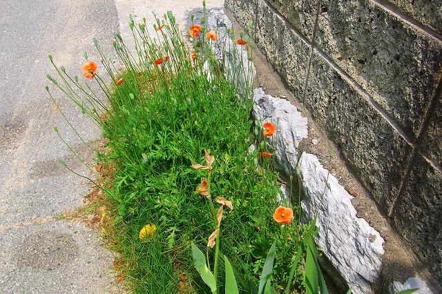 110505-flower020.jpg