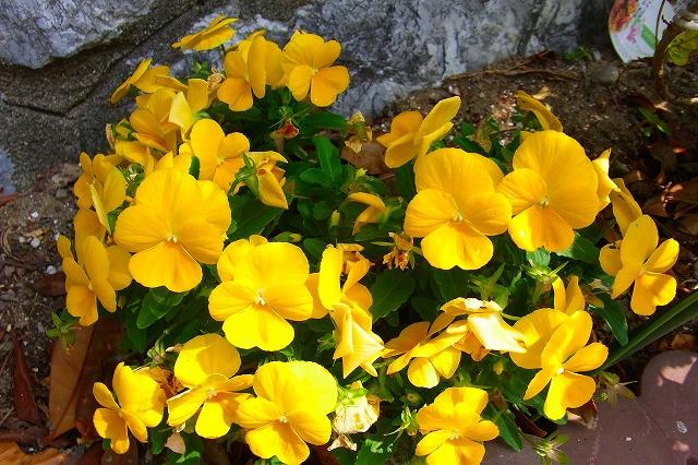 110505-flower018.jpg