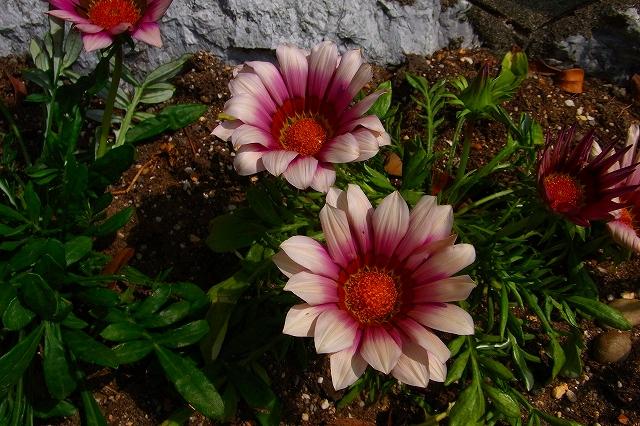 110505-flower016.jpg