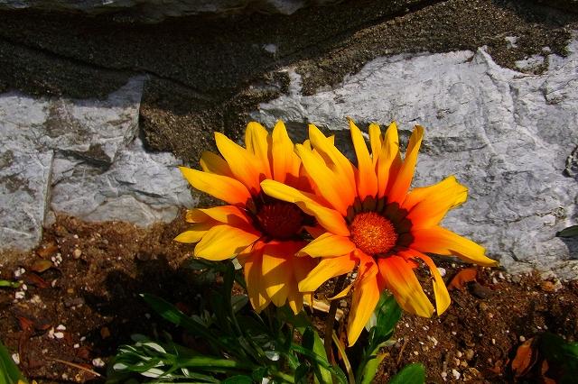 110505-flower017.jpg