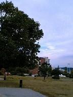 2009738.jpg