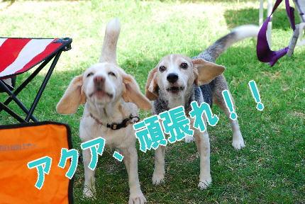 2009・09・20応援団