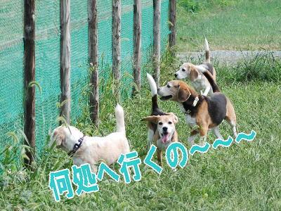 2009・09・23イモ掘りお留守番
