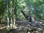 2009・10・04木漏れ陽の森2