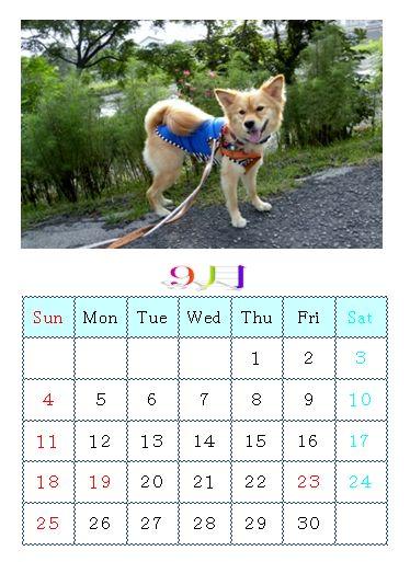りんちゃんカレンダー