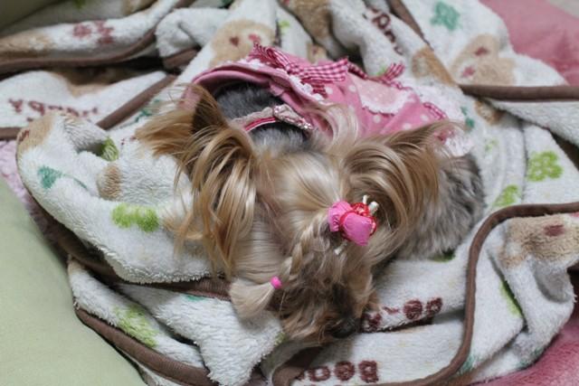 疲れたから寝ます
