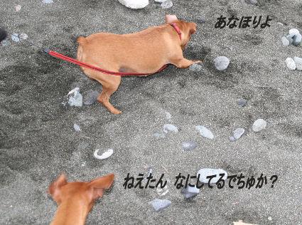 cocoa-momiji21.jpg