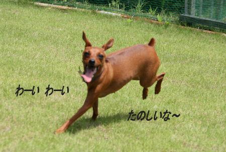 moka-momiji1_20090823210412.jpg