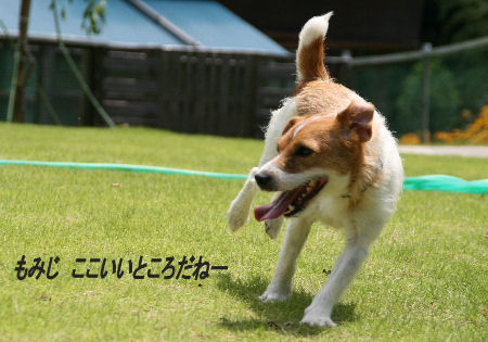 moka-momiji3.jpg