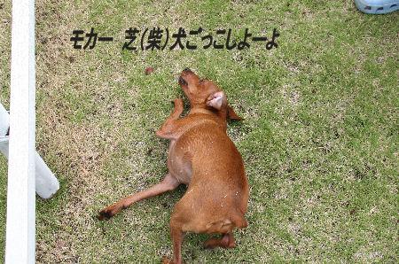 moka-momiji4.jpg