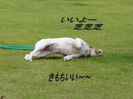 moka-momiji5.jpg