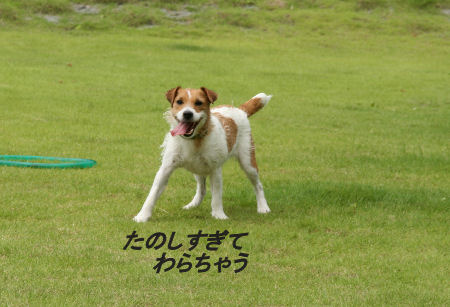 moka-momiji6.jpg