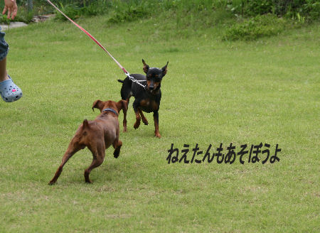 momiji-sora_20090823210741.jpg