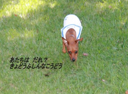 syouwakouen2.jpg