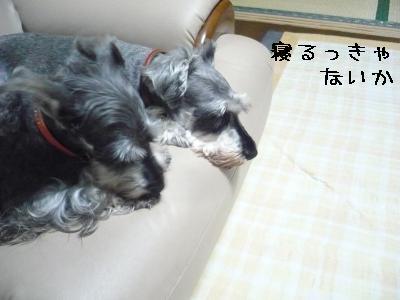 20110620-3.jpg