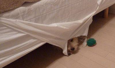 ベッド破壊[1]