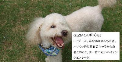 GIZMO profile[1]