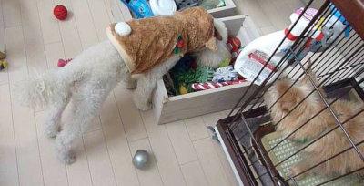 10. おもちゃ箱とGIZMO[1]