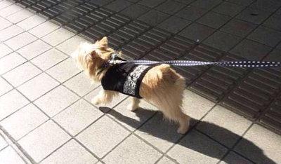 ⑥街歩き2[1]