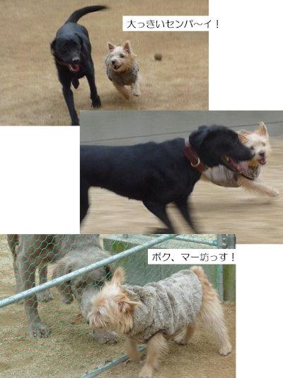 おっきいセンパイ[1]