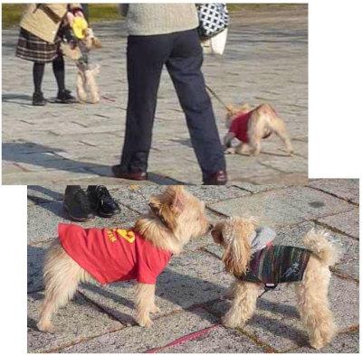⑮フリスビー犬[1]