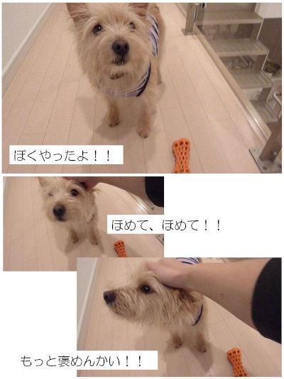 ⑤ほめんかい[1]