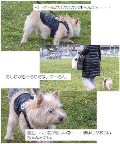④歩き回り[1]