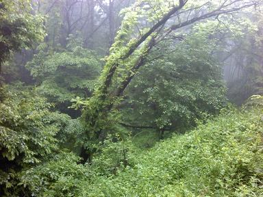 別荘地脇のジャングル