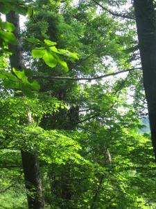 木化けしている母グマ