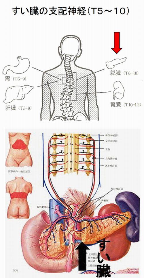 すい臓の支配神経