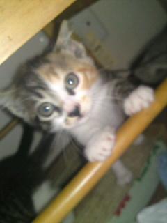 Yさん保護猫 ミカリン
