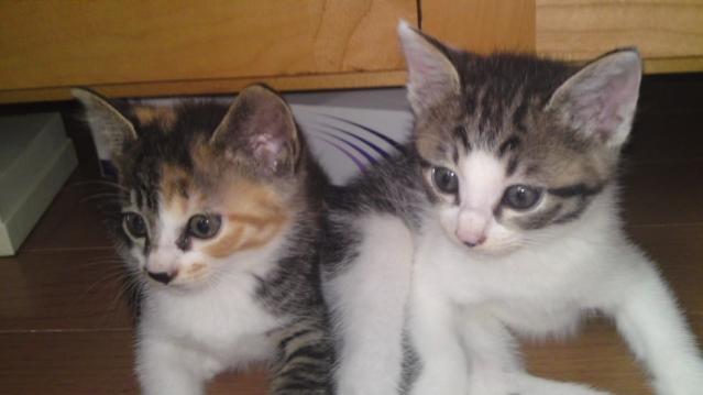 Yさん保護猫 ミカリン&ラファ