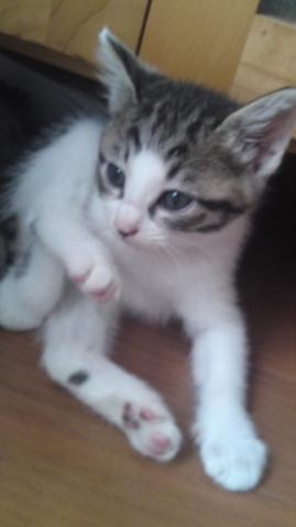 Yさん保護猫 ラファ