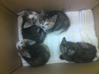 Yさん保護猫 4姉妹
