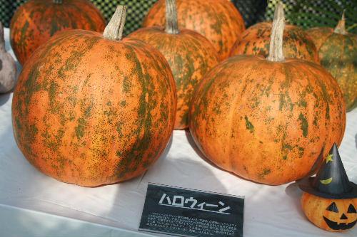かぼちゃまつり3