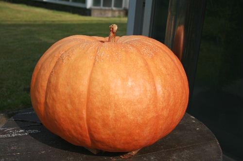 かぼちゃまつり2