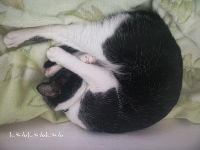 猫団子before4