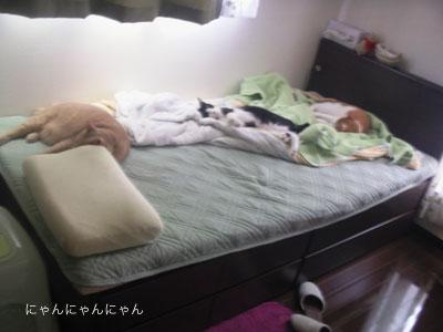 おかんの寝場所1