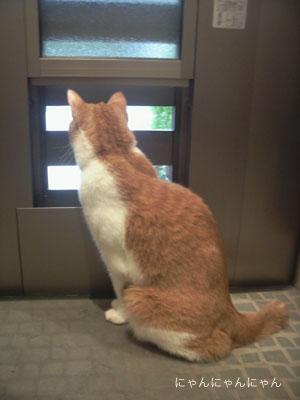 玄関_彩風ドア2