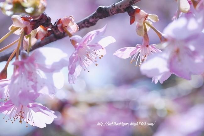 2012_03_31_01.jpg