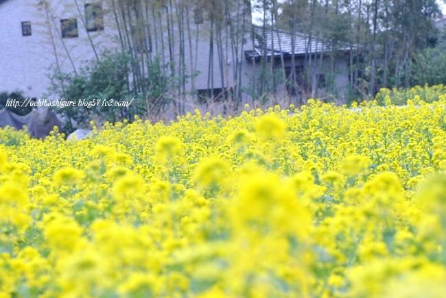 2012_04_13_4.jpg
