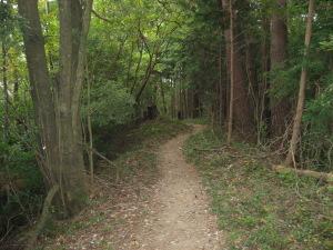 森の中の遍路道