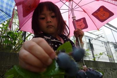 20110612日曜授業参観 (3)