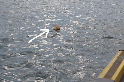 20110807箱崎埠頭 (4)