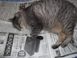 新聞の上でくつろぐ