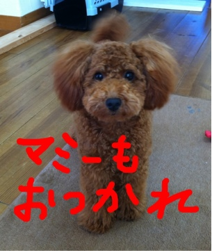 iphone_20111116114051.jpg